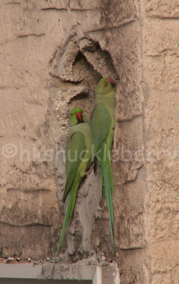 parrotswat
